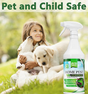 pet safe ant killer
