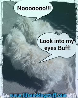 Fluffy forcing eye contact with Buffy.