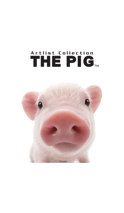 Artlist Collection THE PIG