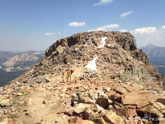 Hiking to Bald Mountain in the Uintas, Hiking in Utah with Dogs