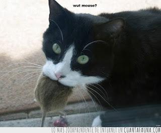 ¿Per qué no ña minjá per a gats en gust a rata, ratolí o furigaña?