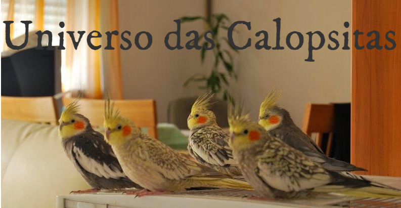 d4a39019f Universo das Calopsitas  Guia de Saúde.