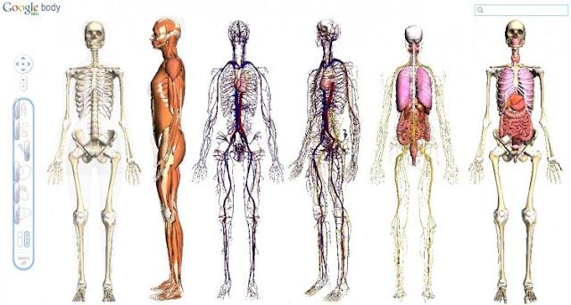 جسم الإنسان بتقنية ثلاثي الأبعاد Google Body