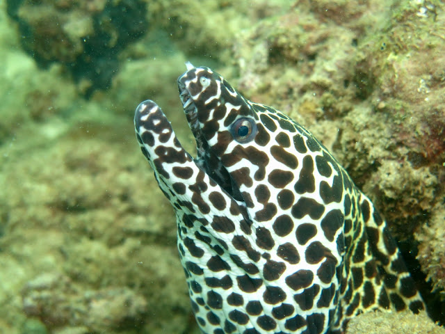 Photo of a moray eel during diving Tin Lizzy wreck, Phuket, Thailand