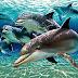 Lumba-lumba | Dolphin