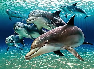 Kumpulan ikan lumba lumba
