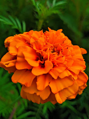 flower wallpaper photo download