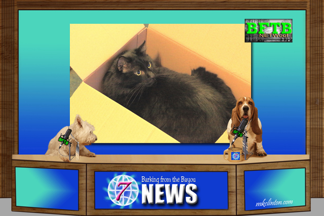 BFTB NETWoof News with cat in a box