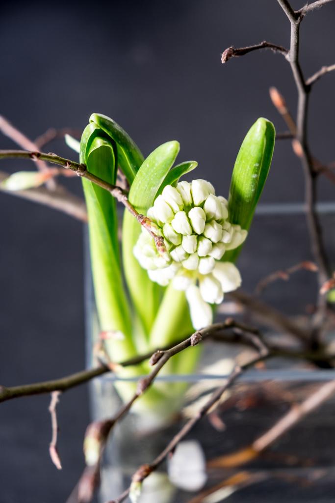 www.fim.works | Fotografie. Wortakrobatik. Wohngefühl. | Lifestyle Blog | weiße Hyzinthen mit Zweigen in der Vase