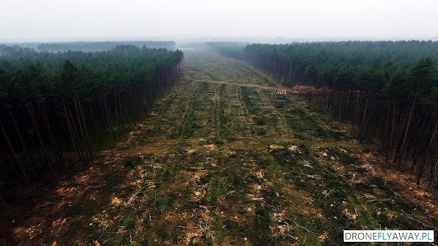 Widok z drona na wycinkę drzew w okolicy wsi Tryszczyn