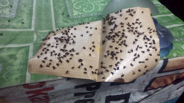 Lalat yang memenuhi kertas perangkap di warung kopi simpang empat Gampong Cot Baroh