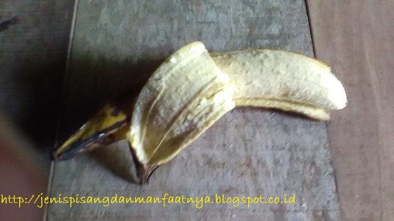 Gambar Warna Kulit Dan Warna Buah Pisang Raja Bawen