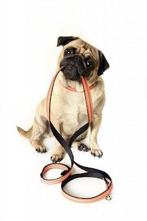 exercício de caminhada para cães