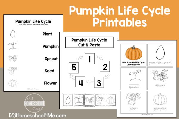 pumpkin-life-cycle-printable-worksheets