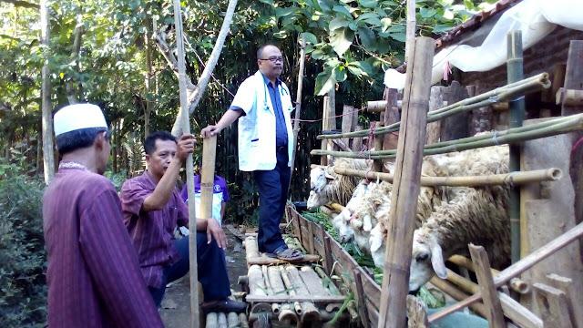 Pemeriksaan Antemortem Domba Qurban Jejaring Lazismu Jember oleh PDHI Jatim VII