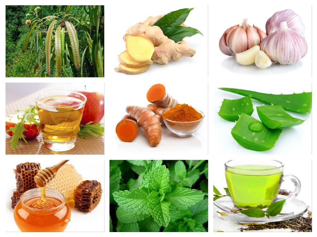 Tanaman Obat Yang Ampuh Mengobati Alergi