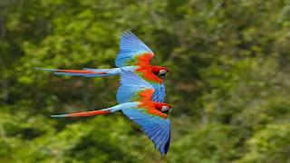 Pasangan burung yang cantik