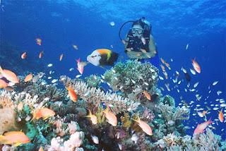 منطقة البحر الكاريبي