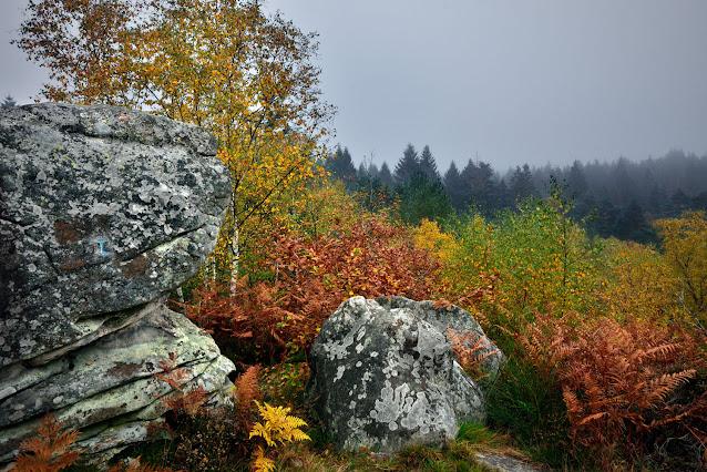 Sentier des étroitures, forêt de Fontainebleau.