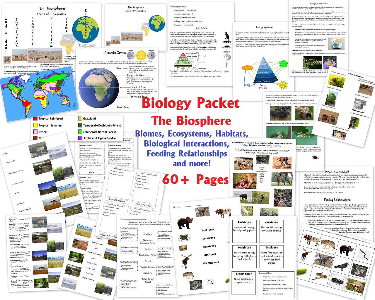 biology unit 2 1 an introduction to biology unit 1 chemistry 2 the chemical basis of life i:  atoms, molecules, and water 3 the chemical basis of life ii: organic molecules.