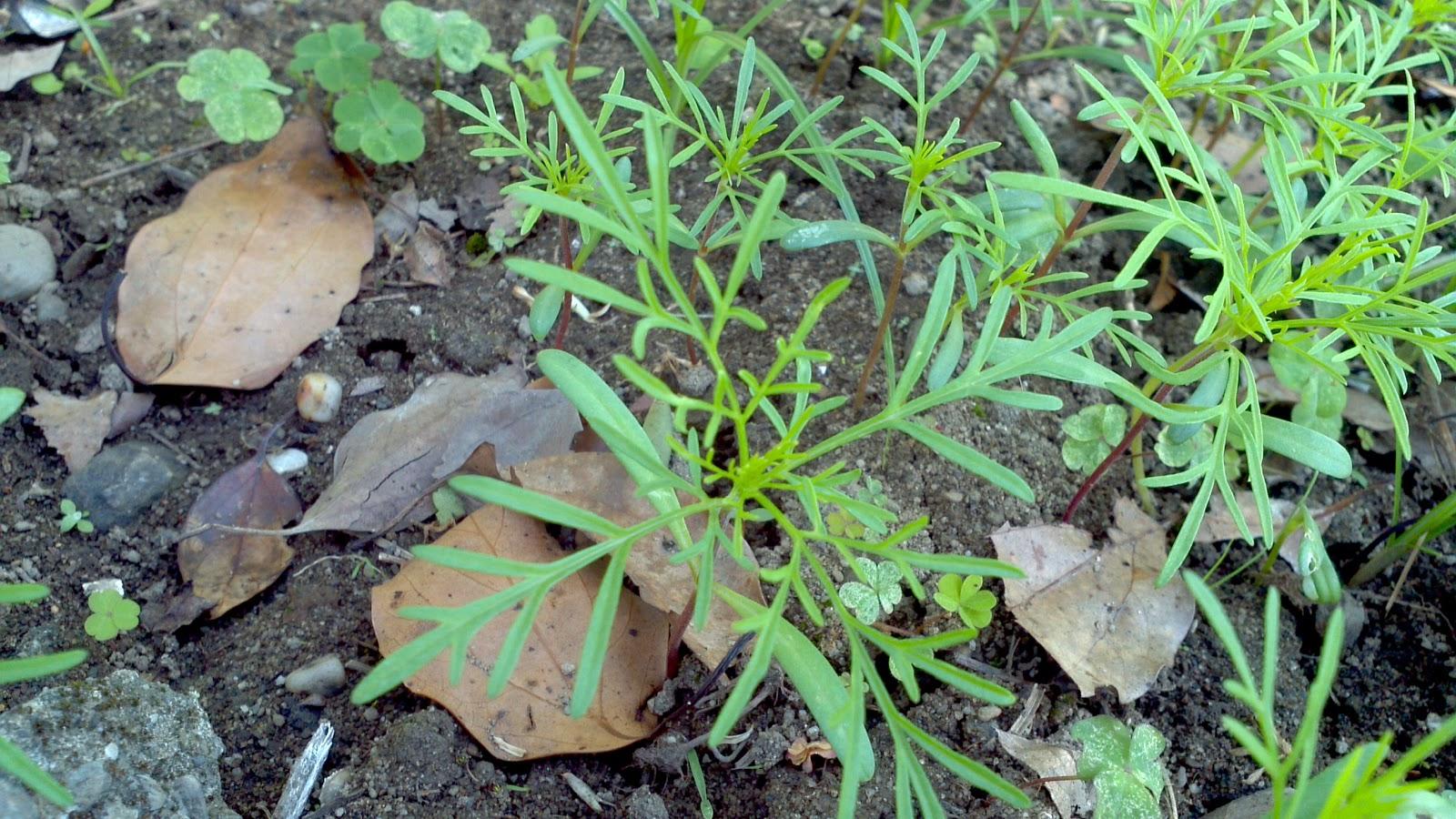 芥菜種會花蓮習藝所: 散播種子,萌芽希望