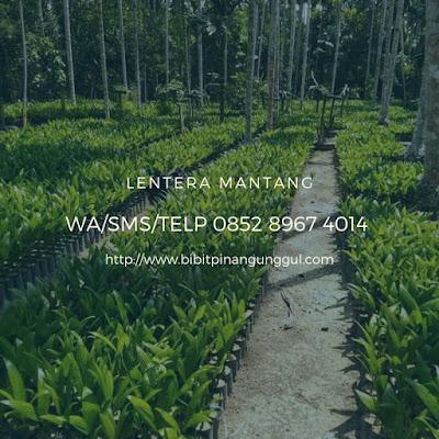https://www.bibitpinangunggul.com