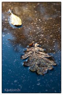 Őszi levelek tócsában eső után