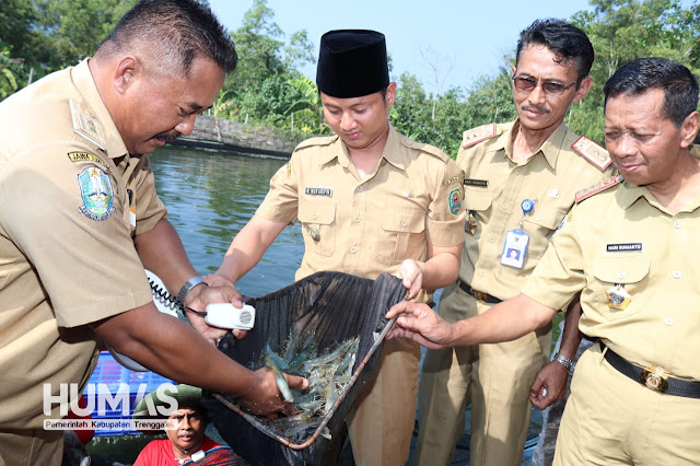 Nur Arifin Heran, Udang Windu Bisa Dibudidaya Dengan Baik di Trenggalek