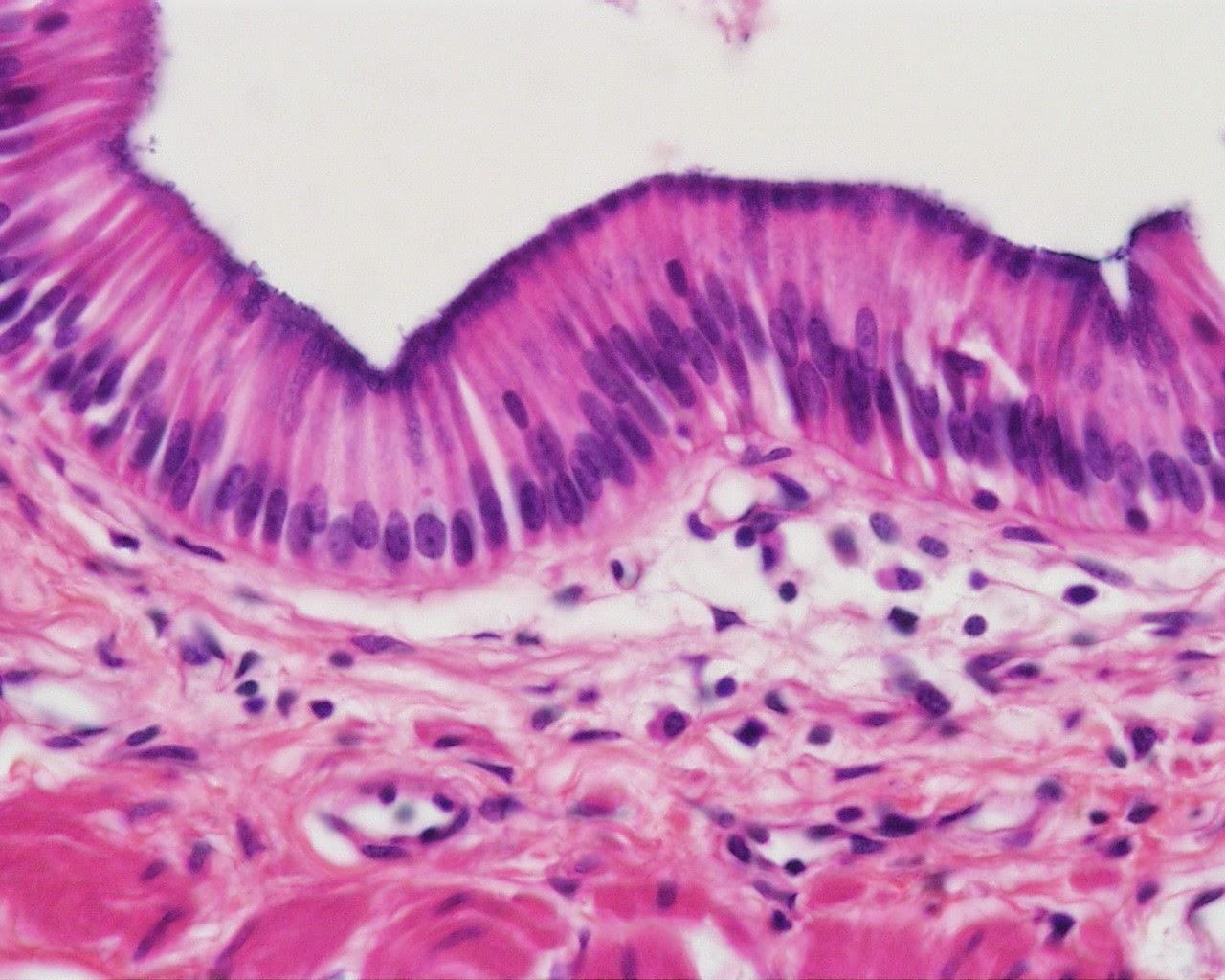 Mcq On Histology Test