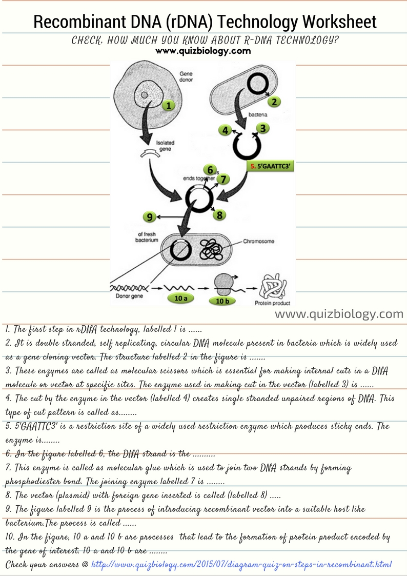 Recombinant DNA Technology Worksheet PDF Biology Exams 4 U – Dna Technology Worksheet