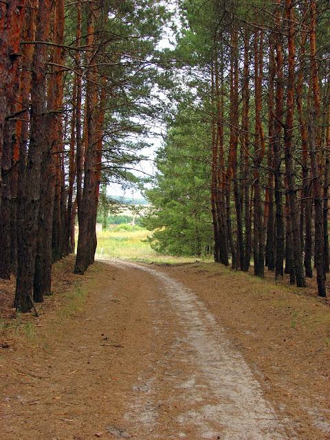 красивые места харьковской области, дорога к реке