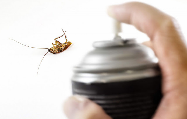 Natural Home Remedies To Kill Roaches