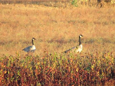 Llano Seco Wildlife Management Area