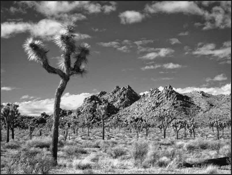 infrared,ir,photography,desert,Joshua Tree National Park