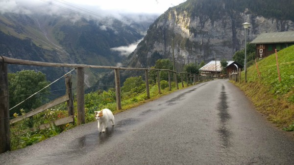 gimmelwald animals