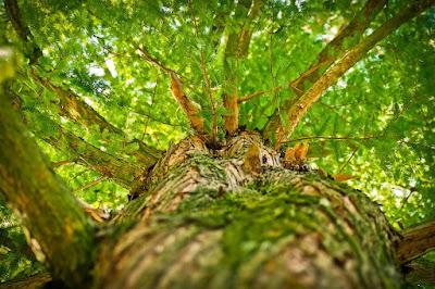 admirer-la-vue-sous-un-grand-arbre