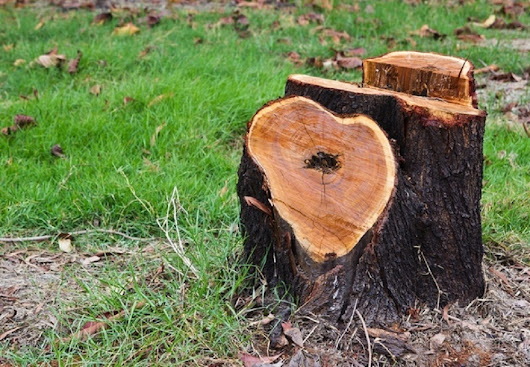 Why it's in Your Best Interests to Get a Tree Stump Removed by Seasoned Experts