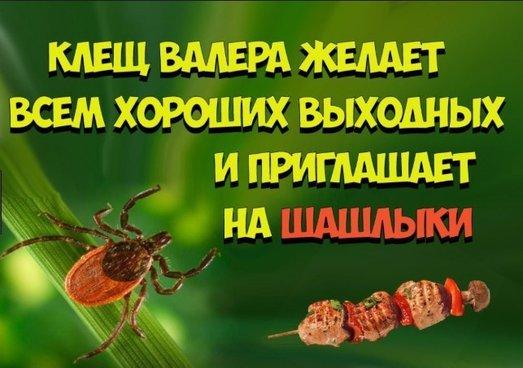 В Башкирии выросло число пострадавших от клещей