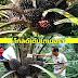 โกลด์เด้นเทเนอร่า ปาล์มน้ำมันสัญชาติไทย พันธุ์ทนแล้ง ผลผลิตสูง 5 ตัน/ไร่/ปี