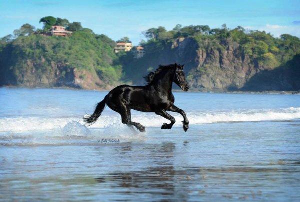 Fond d 39 cran de cheval fonds d 39 cran hd - Chevaux gratuits ...