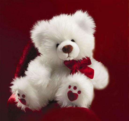 Photo Gallery   Free Premium Wallpapers  : Sweet Teddy ...