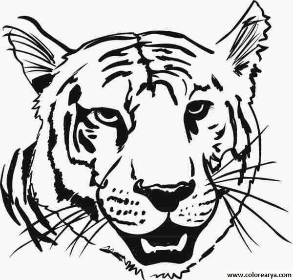 La Chachipedia Dibujos De Tigres Para Colorear Y Para Imprimir