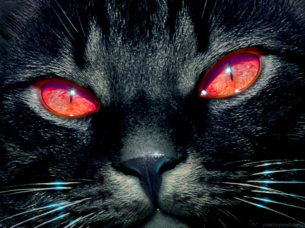 Tv Cat With Red Eyes