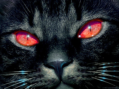 Black Cat Red Eyes Wallpaper Free