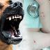Stručnjaci upozoravaju: Ugrizi životinja se ne smiju podcjenjivati