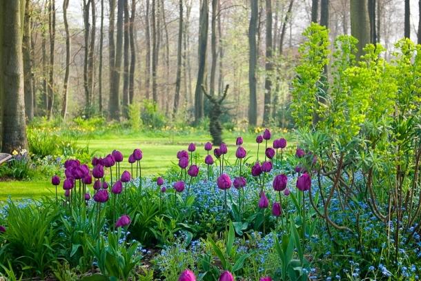 тюльпаны + незабудки