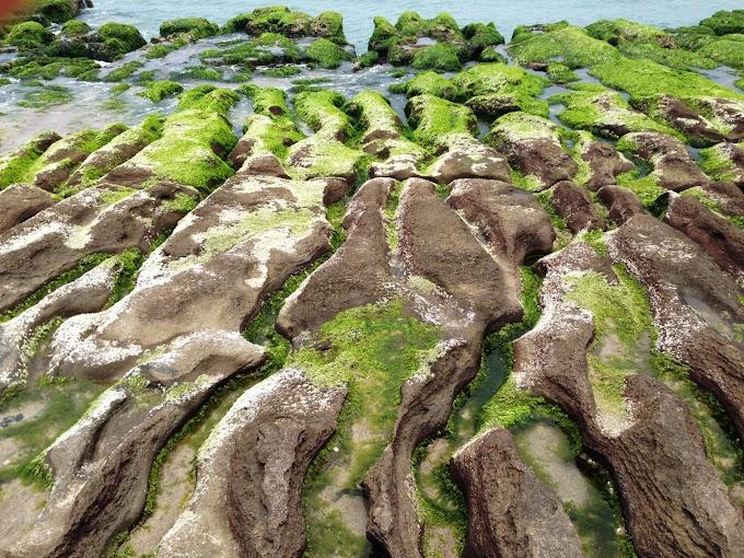 【北海岸一遊Part.3】石門區 | 老梅綠石槽 3~5月季節限定