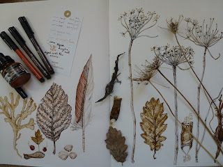 finds in sepia ink