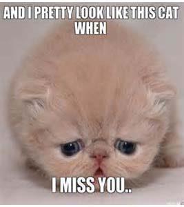i miss you meme  23