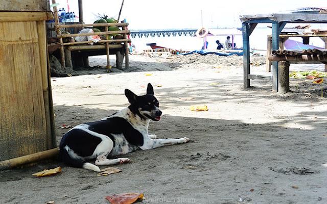 Anjing milik warga setempat sedang berbaring di tempat teduh
